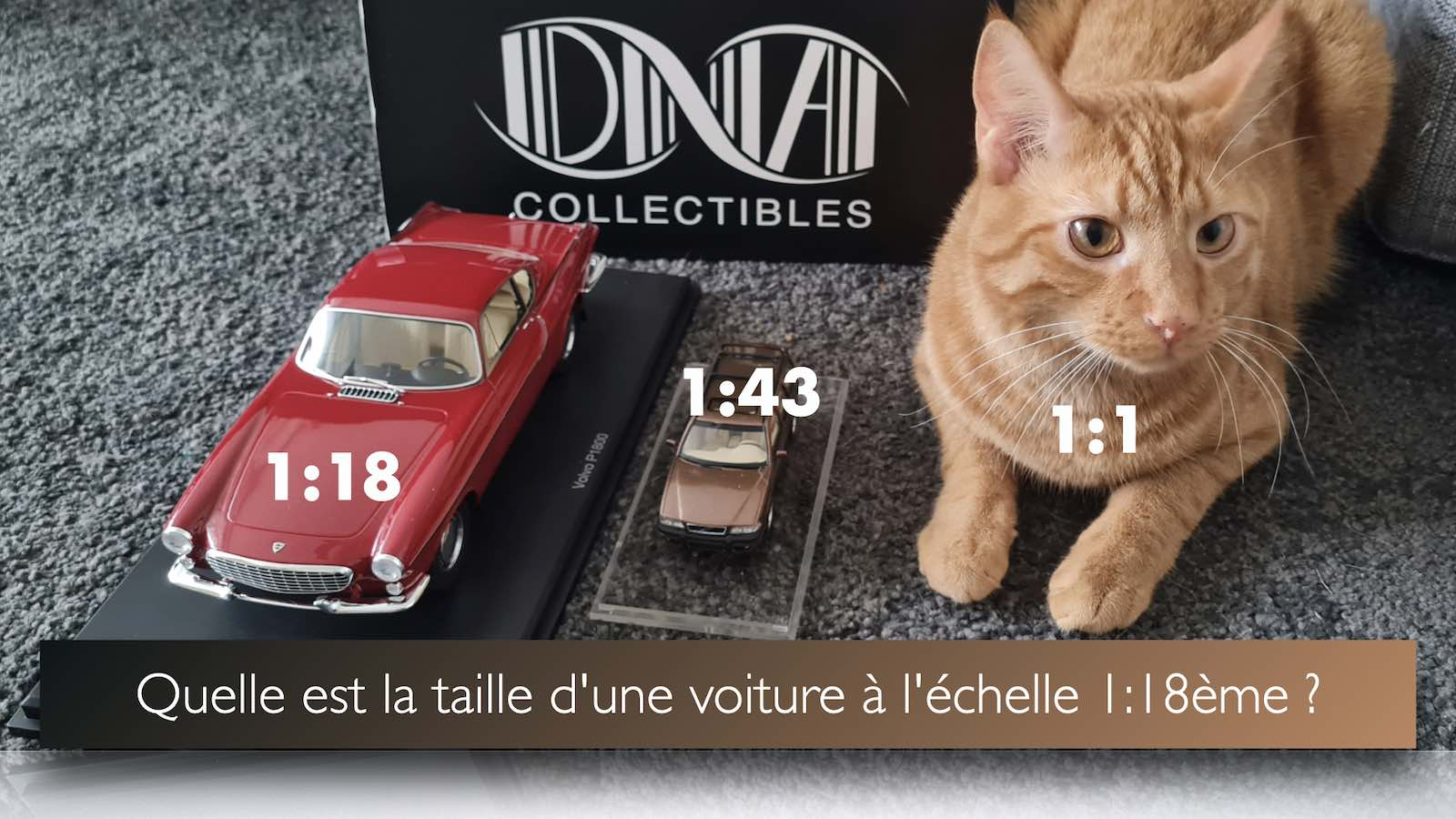 Blog taille 1 18 chat